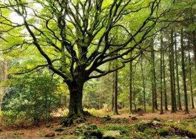 forêt de brocéliande séminaire intuition